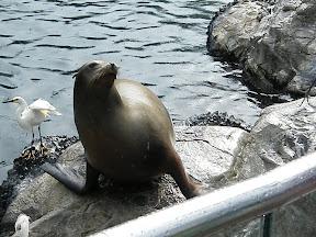225 - Un león marino.JPG
