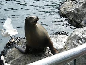 226 - Un león marino.JPG