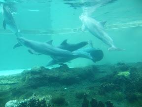 266 - Delfines.JPG