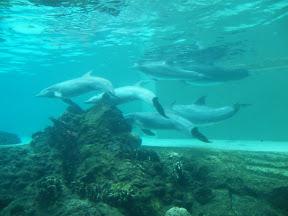 275 - Delfines.JPG
