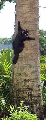 moggie cat climbing a tree in Florida