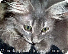 furby with M tabby marking