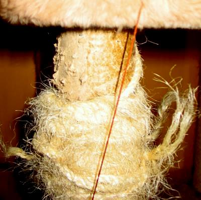 Cat scratching post destroyed by feral cats