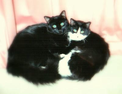 Missie and Freddie