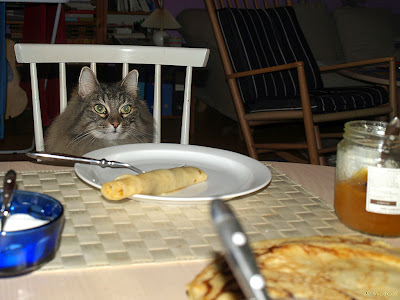 Milly a cat looking at a pancake sitting at a table
