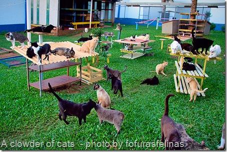 clowder of cats at a sanctuary