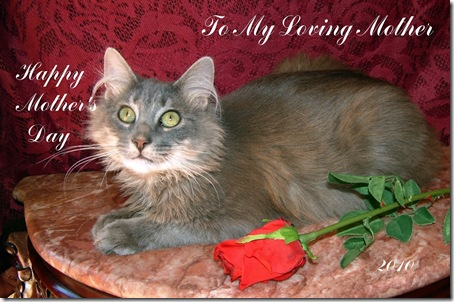 Furby on burgundy laying with the rose looking up
