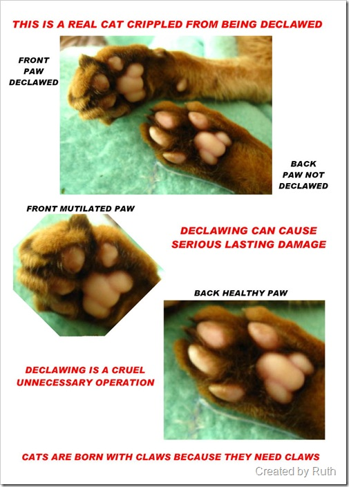 declawing poster showing damage to paw pads