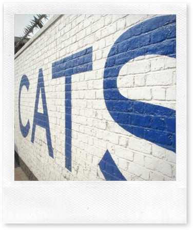 Cat rehoming centres in London Battersea