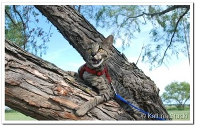 savannah-cat-in-tree