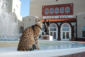 MAGIC the F1 Savannah cat from A1 Savannahs against a fountain