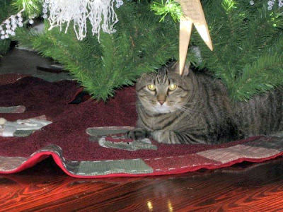 Mickey a large moggie under the Christmas tree
