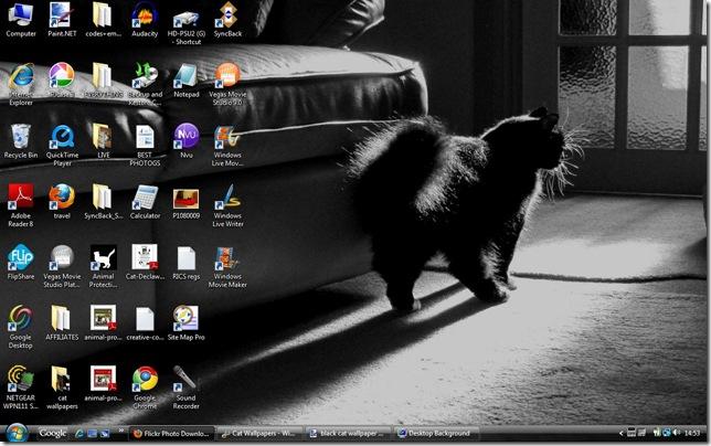 black cat wallpaper 4