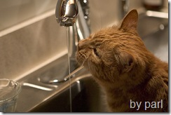 cat drinking water from tap faucet