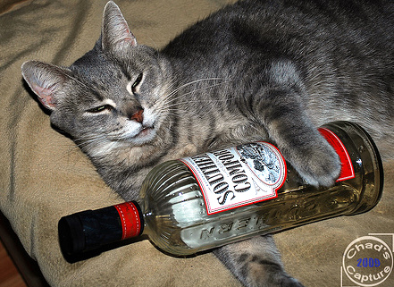 tabby cat with bottle of Southern Comfort