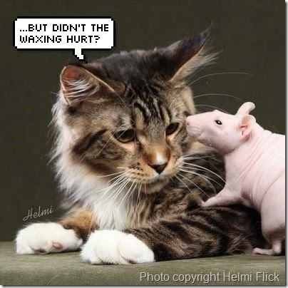 cat-and-rat
