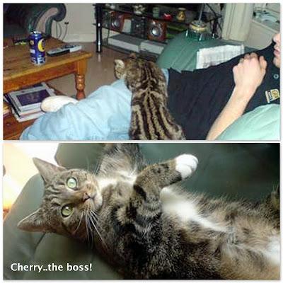 Moggie cat
