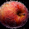 an apple in the darkness.jpg