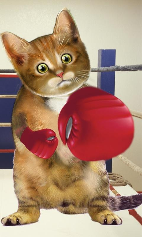 Boxing Cat - screenshot