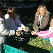 SA_Raccolta_olive_2011_18.jpg