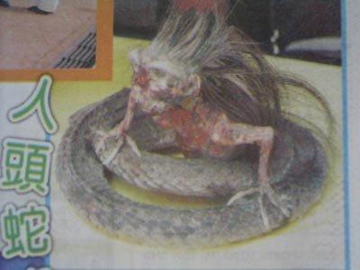 五头蛇罕见图片_震惊世界的五头蛇罕见图片_尹释一_新浪博客