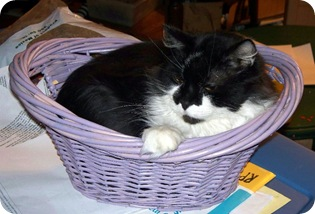 kiki in tiny basket