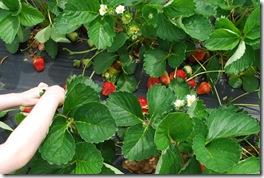 fresh berry heaven