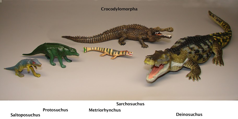 Archosauromorpha in a ...