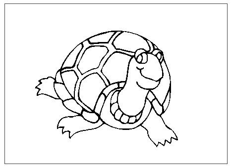 Tortugas Para Colorear Proyecto Tortugas