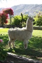 [04.067]_Mansion_del_Fundador_Alpaca_Huacaya