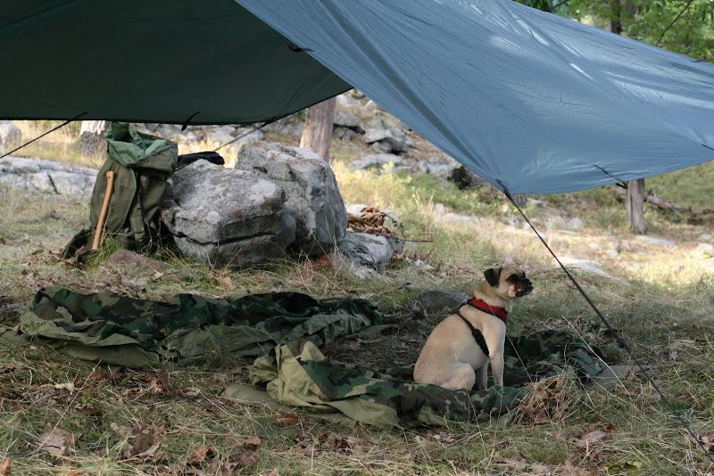 Tent Vs Tarp Amp Most