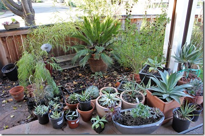 110114_succulents_on_front_porch