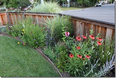 100703_front_yard2