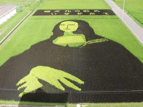rice-paddy-art (28)