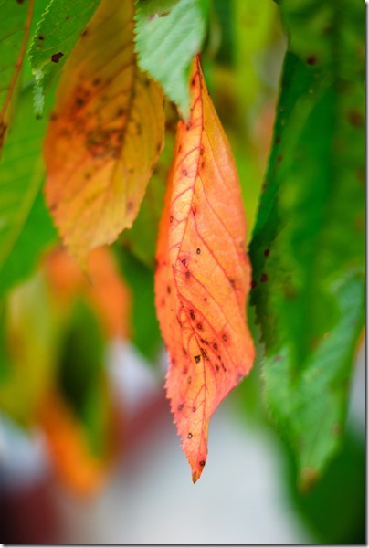 sign-of-fall-red-brownish-leaf-3