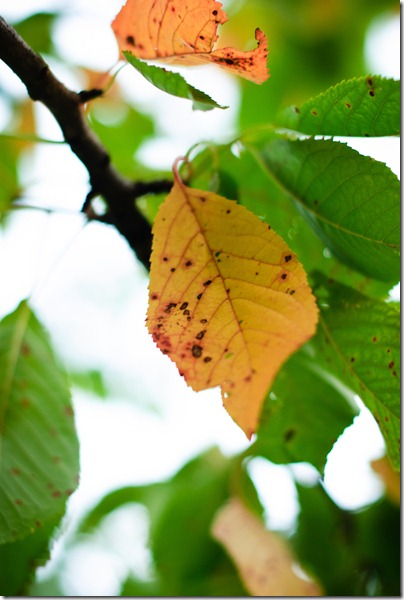 sign-of-fall-red-brownish-leaf-2