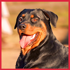 Dog Wallpapers LWP icon