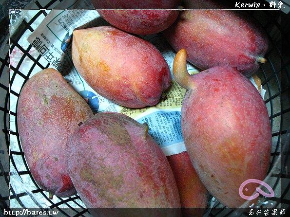 芒果節照片