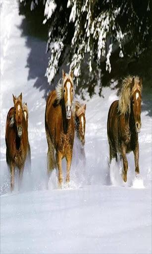 Running Horse live wallpaper