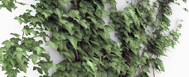 Ivy Grower Creare L Edera Rampicante Su Cinema4d Angelo Ferretti