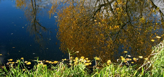 Ouse Reflections