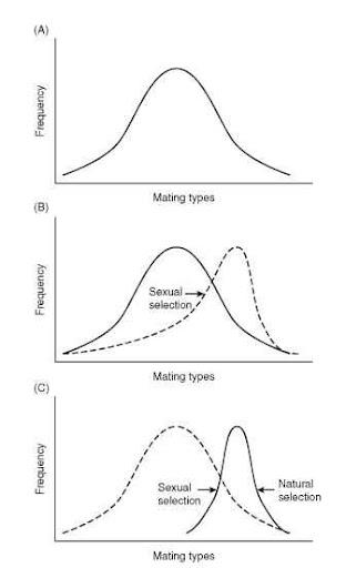 Darwin natural selection vs sexual selection