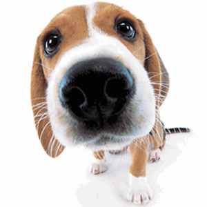 Cute Dog Sniffs Live Wallpaper apk