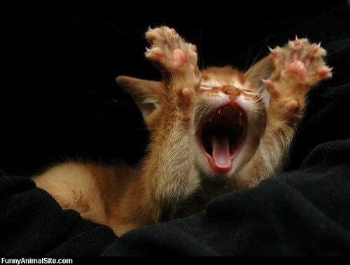 呻吟是快乐的呐喊,叫床是幸福的号角
