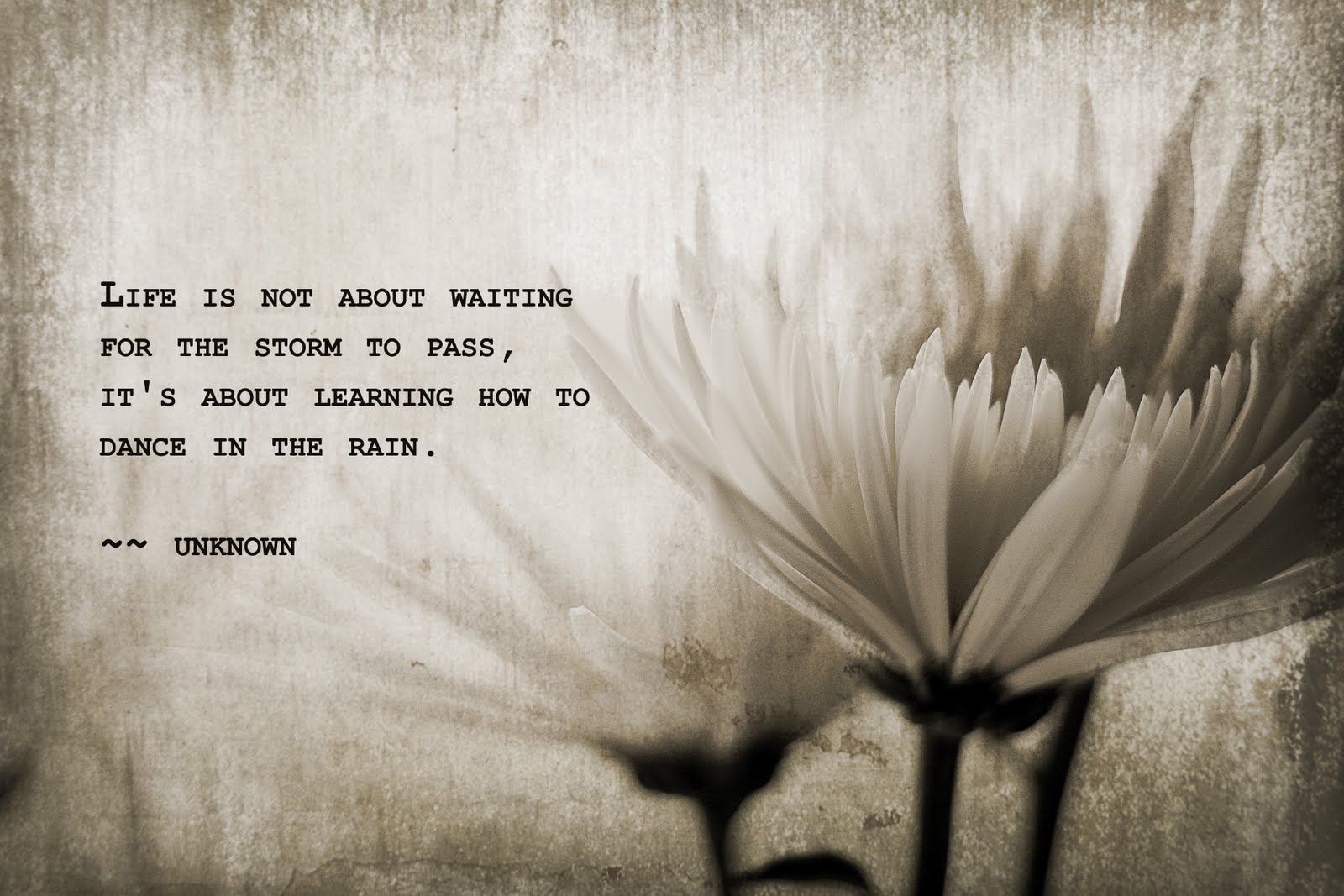 Dance In The Rain Quote Quotes Links