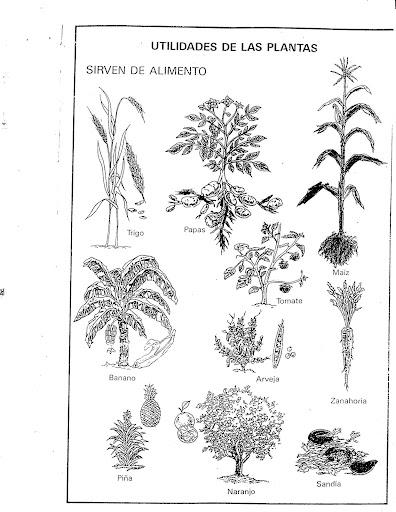 Utilidades De Las Plantas Para Colorear Imagui