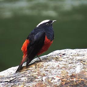 by Asim Mandal - Animals Birds