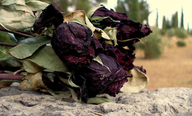 Rosas para federico.jpg