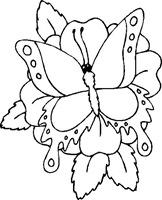 jyc mariposas (2)