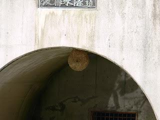 ハチの巣!?